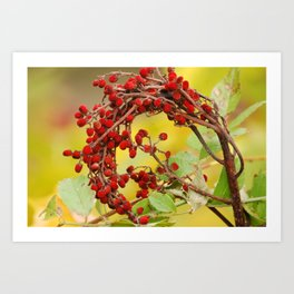 Autumn Berry Art Print