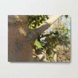Tree pit Metal Print