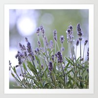 lavender Art Prints featuring lavender by Artemio Studio