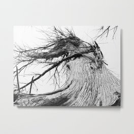 050 | hill country Metal Print