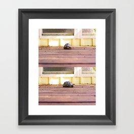 Mugshot Turtle Framed Art Print
