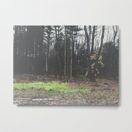 Autumn 15 Metal Print