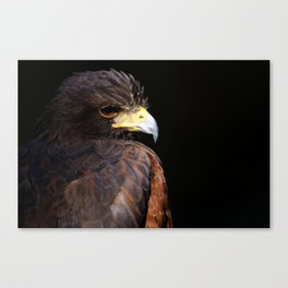 Harris Hawk | Wildife Photography | Bird of Prey | Bird | Raptor | Portrait | Hawk Canvas Print