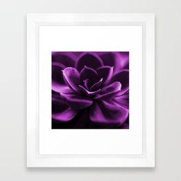 Succulent Plant In Violet Color #decor #society6 #homedecor Framed Art Print