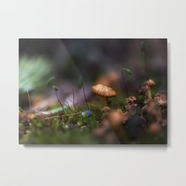 The Tiniest of Mushrooms Metal Print