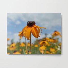yellow rudbeckia flower in the garden Metal Print