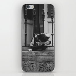Dog looking for freedom iPhone Skin