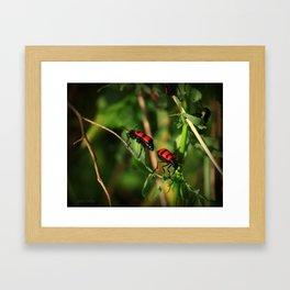 back 2 bug Framed Art Print