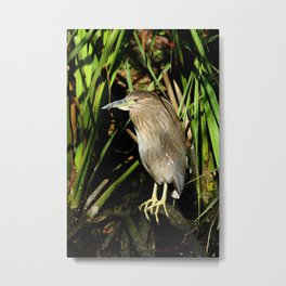 A Young Beauty Metal Print