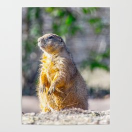 The Good Gopher Poster