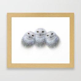 Mother Snowy Owl & Owlets Framed Art Print