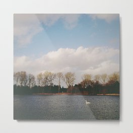 Swan swimming against the wind. Lynford Water, Norfolk, UK Metal Print