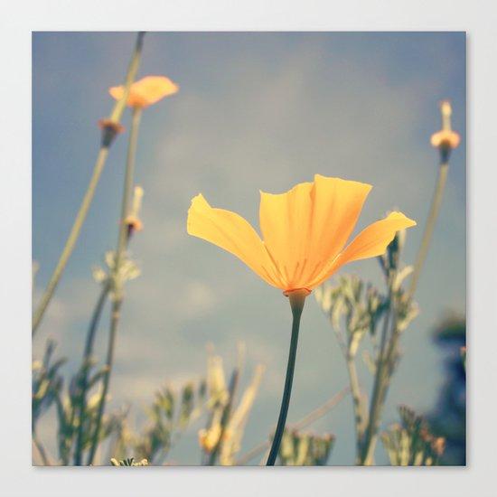 orange poppies! Canvas Print