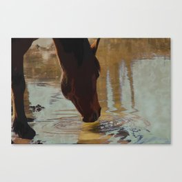 The Watering Hole  - Drinking Percheron Horse Canvas Print