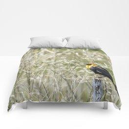 Yellow-headed Blackbird, No. 2 Comforters