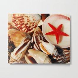 Shells and a Starfish Metal Print