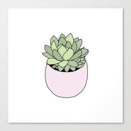 Suculent in flowerpot Canvas Print
