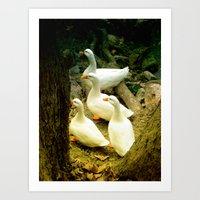 duck Art Prints featuring duck by gzm_guvenc