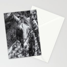 Mica and Malpais BW - Pryor Mustangs Stationery Cards