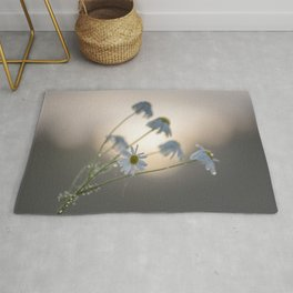 New day with dewy daisy Rug