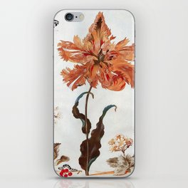 A Parrot Tulip Auriculas & Red Currants with a Magpie Moth Caterpillar Pupa by Maria Sibylla Merian iPhone Skin