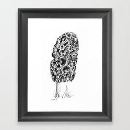 Morel 1 Framed Art Print