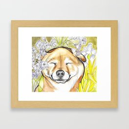Jay Jay the happy Shiba Framed Art Print