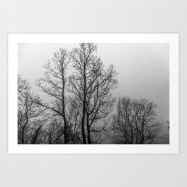 Black and white naked trees Art Print
