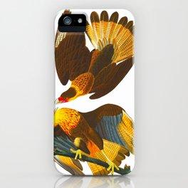 Caracara Eagle Illustration iPhone Case