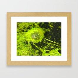 pond scum II Framed Art Print