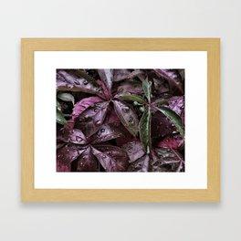 Lila blad Framed Art Print