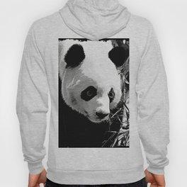 Panda Bear Hoody
