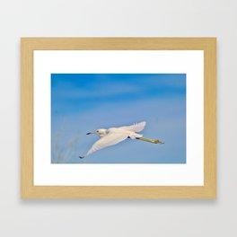 Flying Heron Framed Art Print