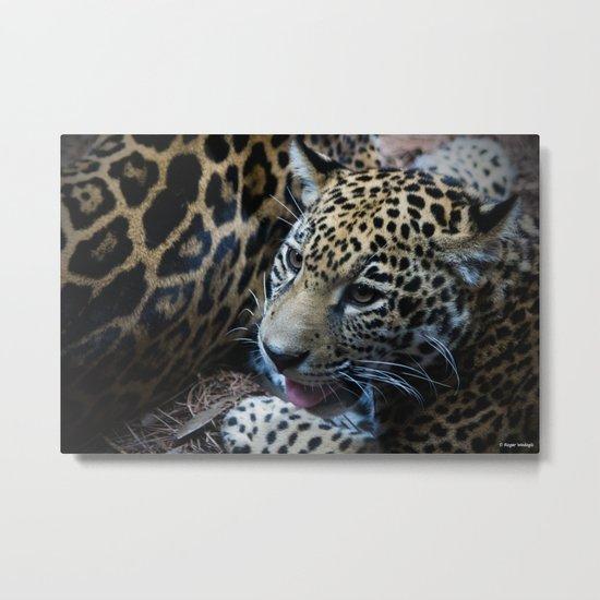 Jaguar Cub Metal Print