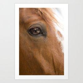 HORSE 2 Art Print
