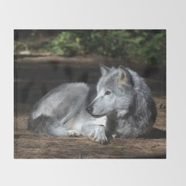 Gray Wolf at Rest Throw Blanket