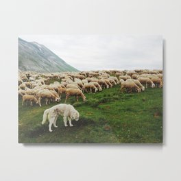 Shepherd life  Metal Print