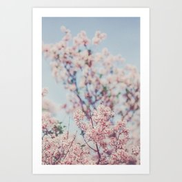 Spring Lilac Flowers Against the Sky Art Print