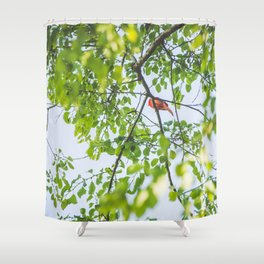 Song from Above Shower Curtain
