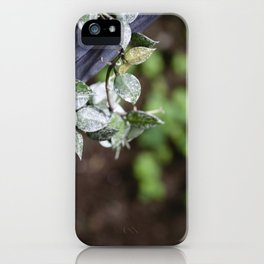 Hoya curtisii     The Houseplant Collection iPhone Case