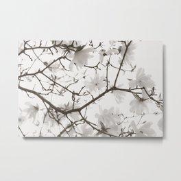 Magnolia Branches Metal Print