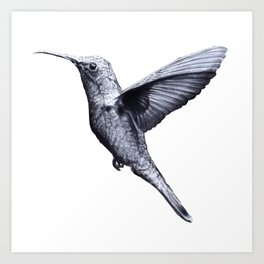Colibrì  Art Print
