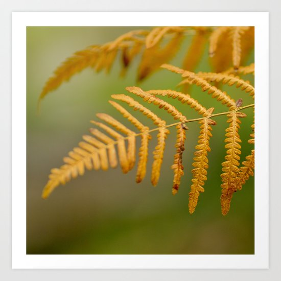 Yellow fern Art Print