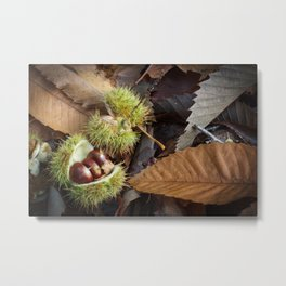 Chestnuts and Leaves Metal Print