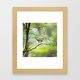 Spring Forest Framed Art Print