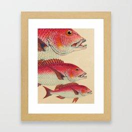 Fish Classic Designs 7 Framed Art Print