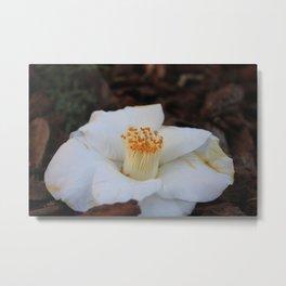 White camelia Metal Print