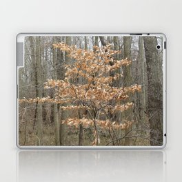 Beautful tree in John Heinz Wildlife Refuge Laptop & iPad Skin