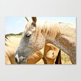 Abilene Horses Canvas Print