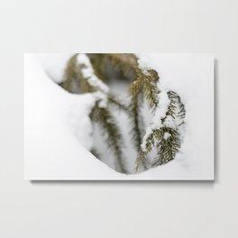 Snowy Spruce Needles 10 Metal Print